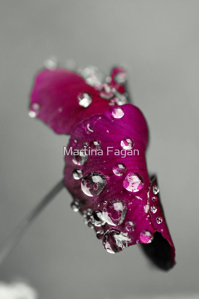 Purple pansy by Martina Fagan