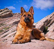 German Shepherd by gsddame