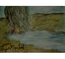 Willow Pond Oil Pastel Photographic Print