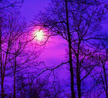 purple night skies by ANNABEL   S. ALENTON