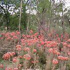 Outback near Parkes, NSW by Alex Bonner