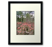 Outback near Parkes, NSW Framed Print