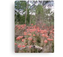 Outback near Parkes, NSW Canvas Print