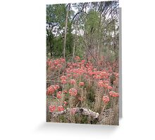 Outback near Parkes, NSW Greeting Card