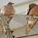 Pássaros em repouso. by AluisioRibeiro