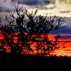 Sunset in Canberra by Geoffrey Thomas