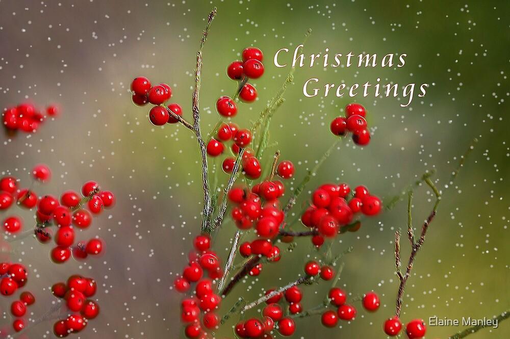Christmas Berries by Elaine  Manley