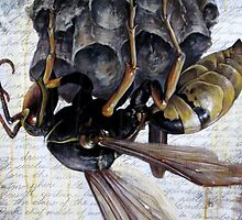 Paper Wasp by Joe Helms