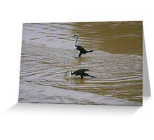 Pied Cormorants Greeting Card