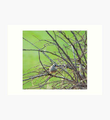 bird amongst bare winter branches Art Print