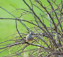 bird amongst bare winter branches by aspenrock