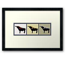3 Bulls Framed Print