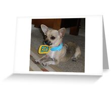 Wilber in his Scooby Doo collar.. Greeting Card