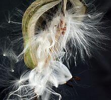 Seedburst by Dianne English