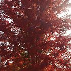 Autumn Tree in Red by Tammy Sexton