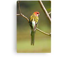Grass Parrot Canvas Print