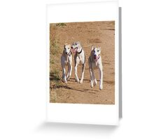 Buddies on the Trail Greeting Card