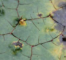 drifted leaf by yvesrossetti