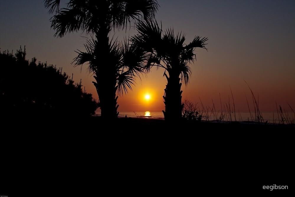 Palmetto Sunrise by eegibson