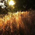 Malawi: dambo at dusk by Anita Deppe