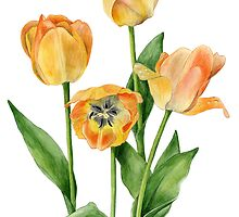 Peachy Tulips - colours of summer by Maureen Sparling