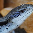 Blue Tongue by KeepsakesPhotography Michael Rowley