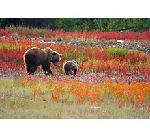 Grizzly family Photographic Print