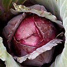 cabbage by Susan Rees-Osborne