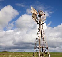 Windmill in OZ by Wendi Donaldson