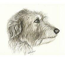 Irishwolfhound Ink 11x14 Photographic Print