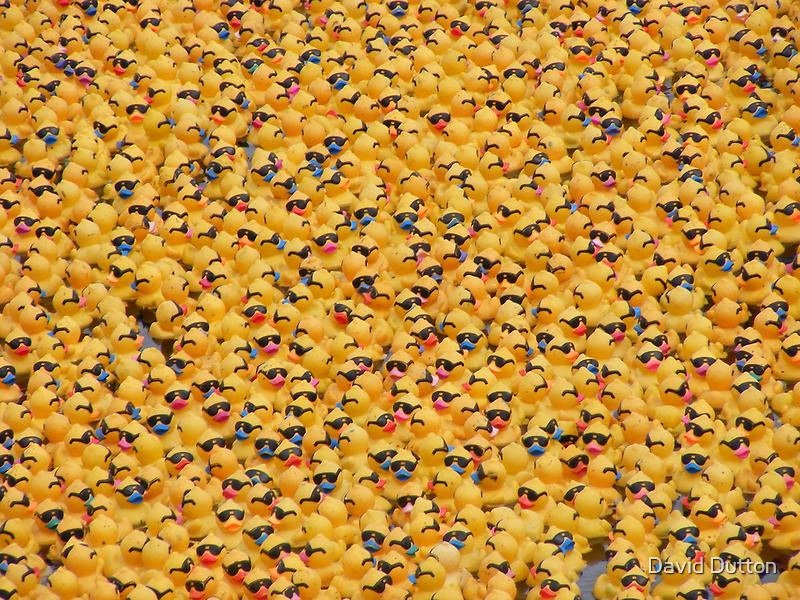 Ducks, ducks, ducks and, er, ducks. by David Dutton