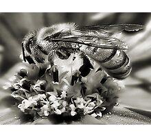Bee~utiful   2 Photographic Print
