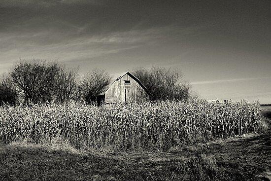 Dilapidated Barn by Brian Gaynor