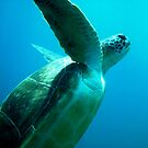 Turtle, El Portito,Tenerife by colourfreestyle