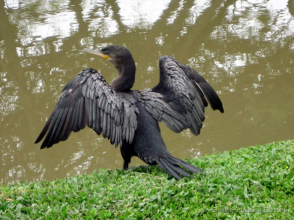 Drying my wings by Shelby  Stalnaker Bortone