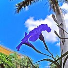 purple beauty by ZSUZSA LADO