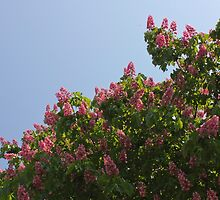 Ruby Red Horse Chestnut Trees by Rod Raglin