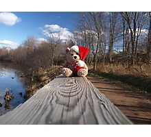 Christmas bear waiting for Santa Photographic Print