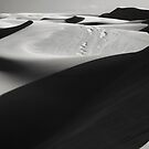 Dune Shadows by Sherrie Chavez