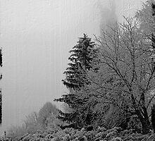 Winter morning in park by Tutelarix