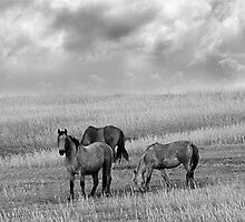 Horses on the Great Plains by Tony Weatherman