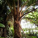 Fern Tree 3 by Luchare