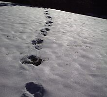 snow prints by dianalynn