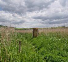 Rural Abbotsbury by Susie Peek