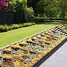 Flower Bed at Pollok House, Glasgow, Scotland by ElsT