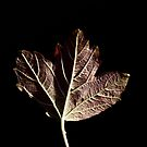 Portrait of a Leaf by Sam Mortimer