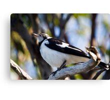 Australian Magpie-Lark perching Canvas Print