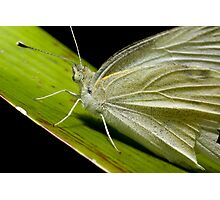 Green Butterfly macro Photographic Print