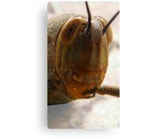 Red pokey tongue grass hopper Canvas Print
