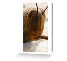 Red pokey tongue grass hopper Greeting Card